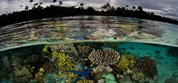Threatened Ecosystems Supported by Revive and Restore's Efforts