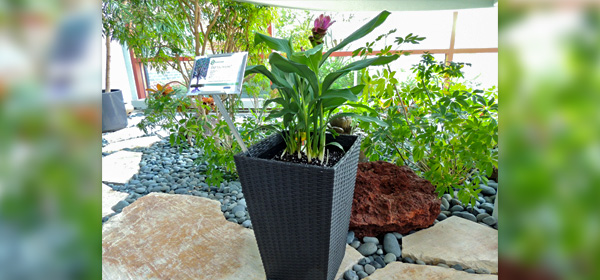 Planter Made from Recycled Nitrile Gloves
