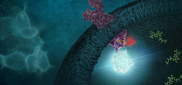 Probing Target Compound Live-Cell Interactions
