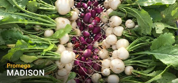 Produce from Blue Bird Farms