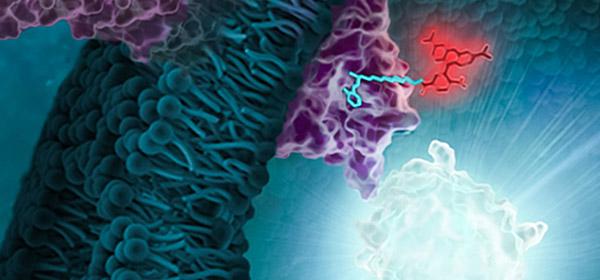 nanobret-te-kinases-600x280