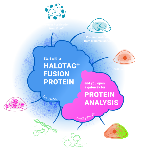 HaloTag Technology A Gateway for Protein Analysis Infographic