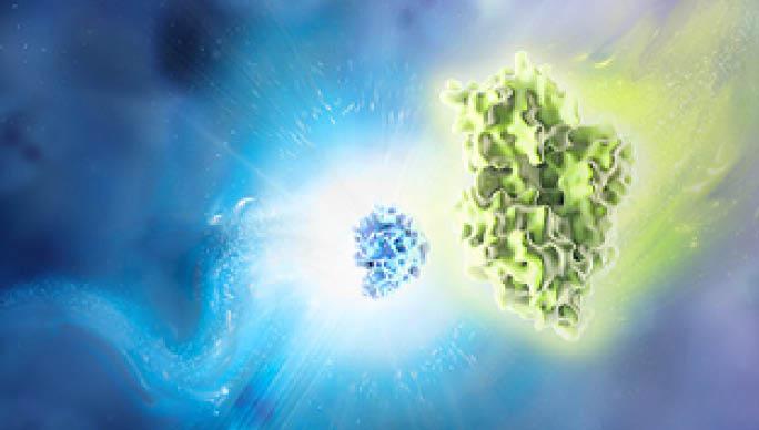 nanoluctechnologysupage-imaging-dual-luciferase