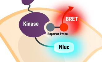 Webinar on NanoBRET in Live Cells Resource